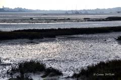 Oiseaux migrateurs dans le golfe du Morbihan