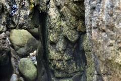 Le visage de granit